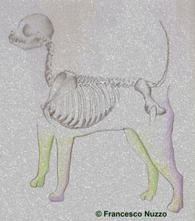 Di rio galeria music velvet kennels chihuahua info for Razza del cane di tequila e bonetti