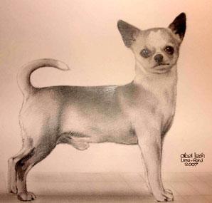 Di Rio Galeria & Music Velvet Kennels - Chihuahua. Info
